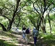 Guided Hiking Tours in Ojai CA
